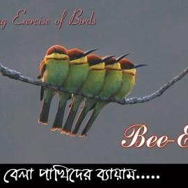 Morning Exercise of Birds / সকাল বেলা পাখিদের ব্যায়াম…/ Bee Eater