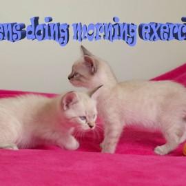kittens doing morning exercise // 朝の運動をしている子猫