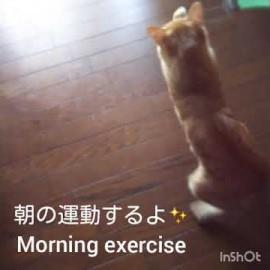 【子猫の成長記録】朝の運動(Morning exercise)